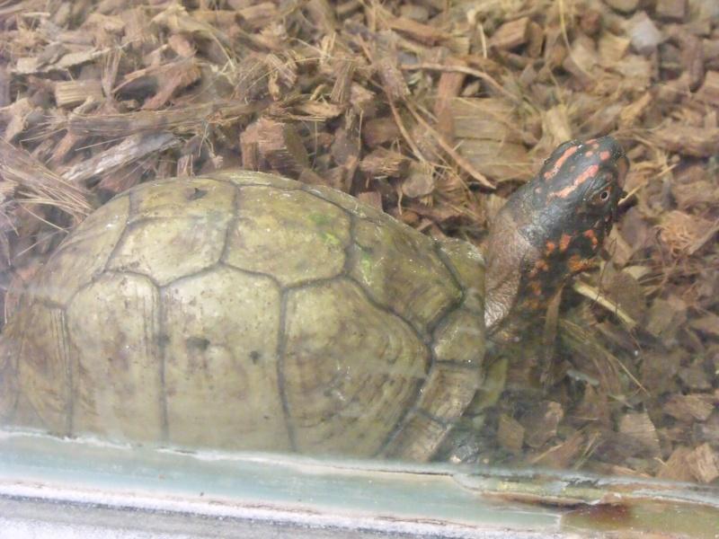 Photos tortues du zooparc de beauval Dscf4917