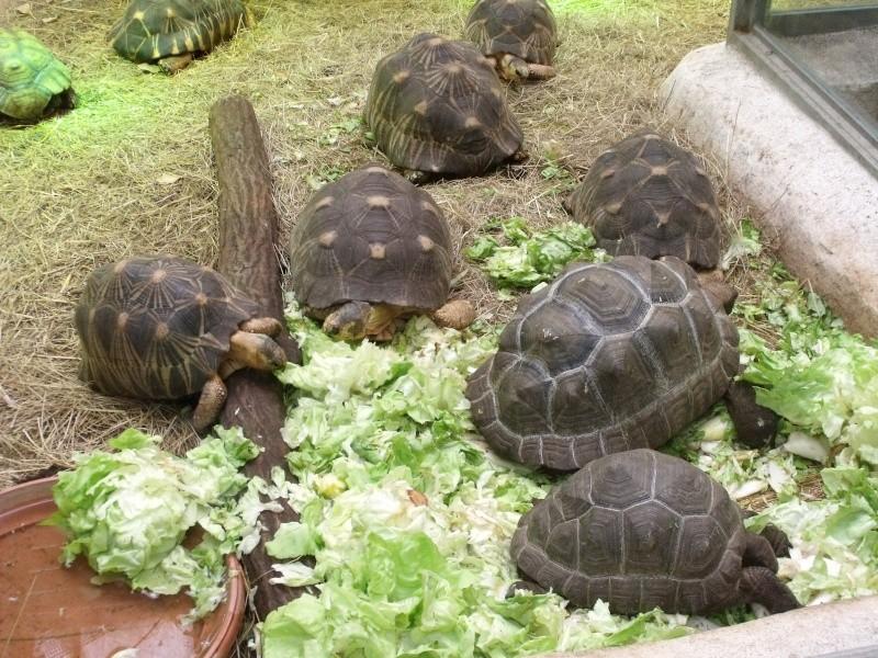 Photos tortues du zooparc de beauval Dscf4918