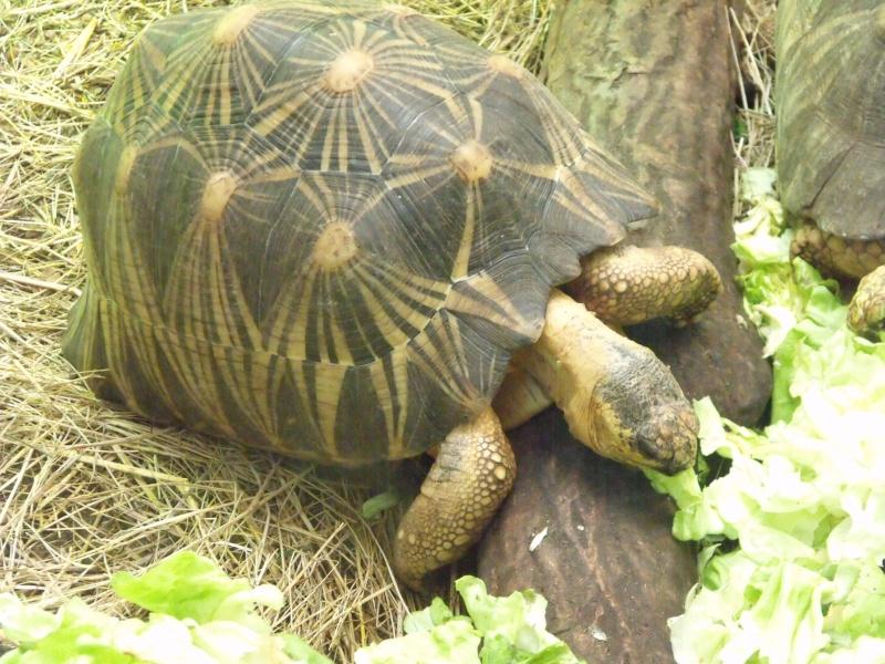 Photos tortues du zooparc de beauval Dscf4919