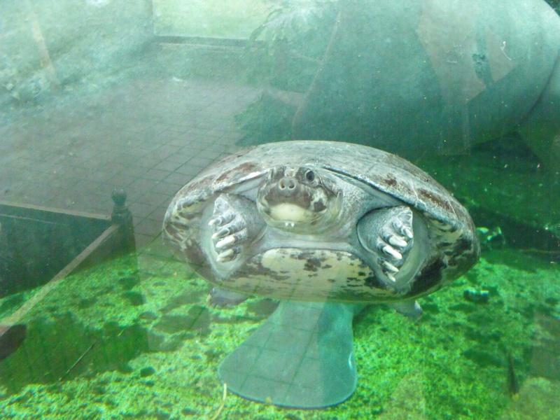 Photos tortues du zooparc de beauval Dscf5110