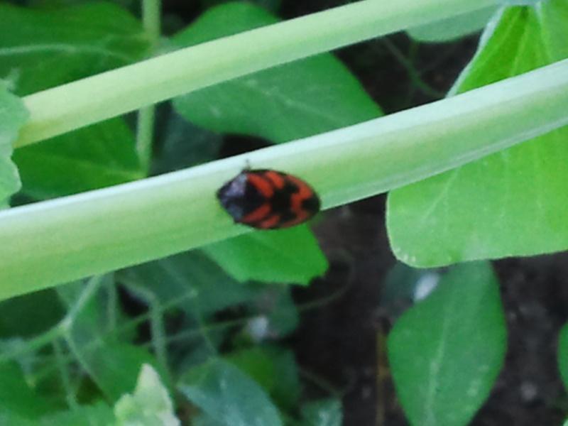 deux insectes qui requierent votre aide Photo012