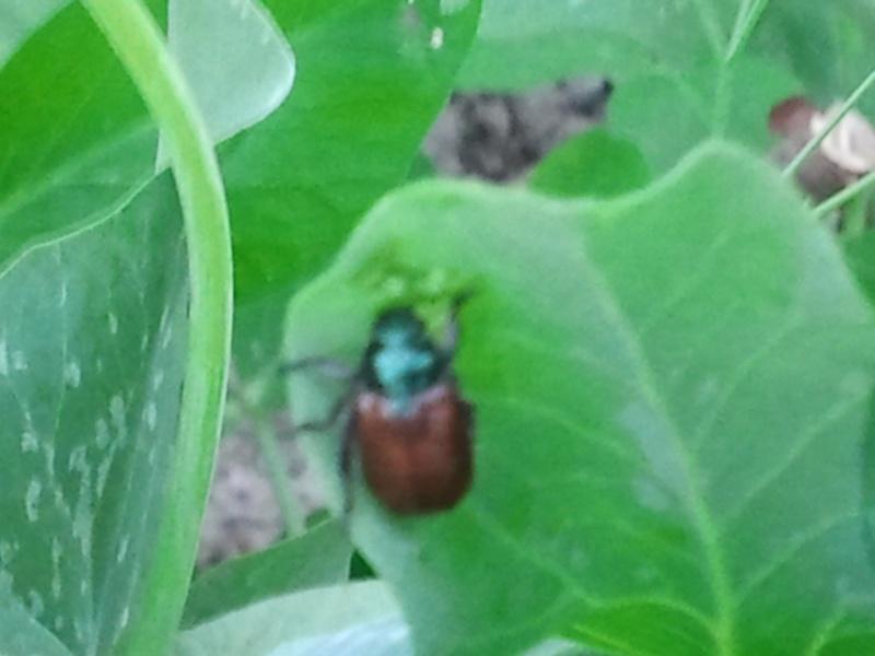 deux insectes qui requierent votre aide Photo013