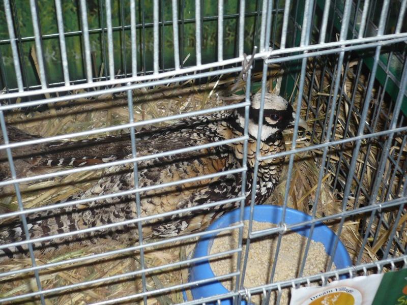 Une visite au SIAM 2012 P1040314