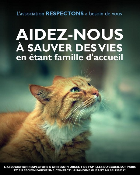 Protection animale - Adoptions Chats chatons, Association Respectons : toutes les semaines (samedi, Paris 10), +  2 fois/mois (Paris 15) 57796610