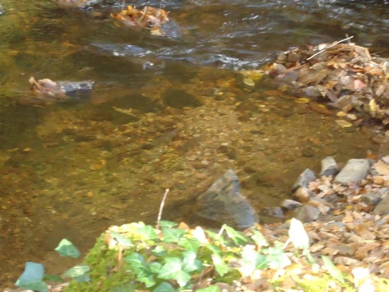 Fraie 2011 sur ma petite rivière De_plu10