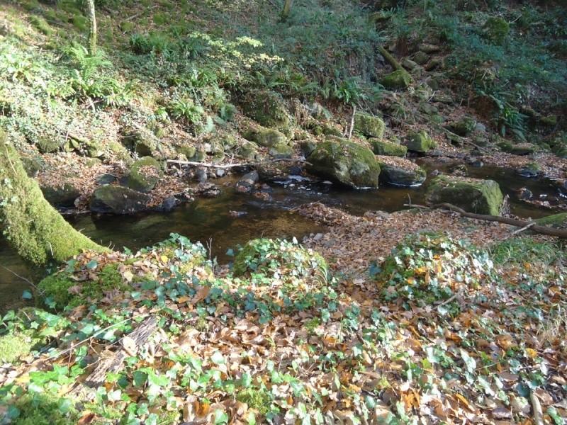 Fraie 2011 sur ma petite rivière Distan10