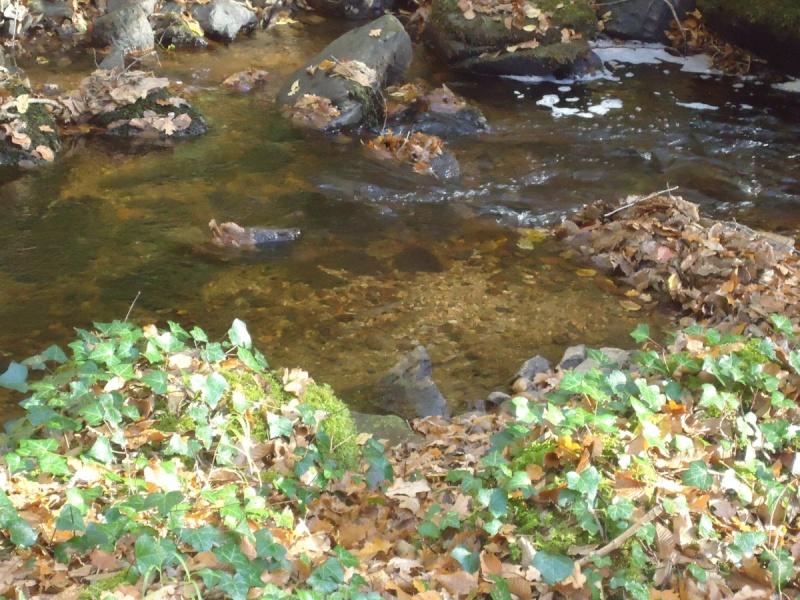 Fraie 2011 sur ma petite rivière Truite11