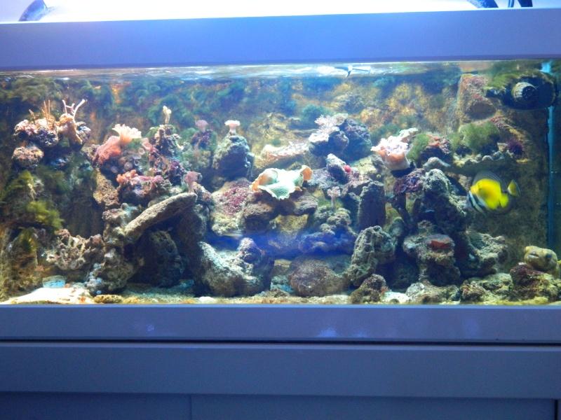 Les algues filamenteuses Dscn1318
