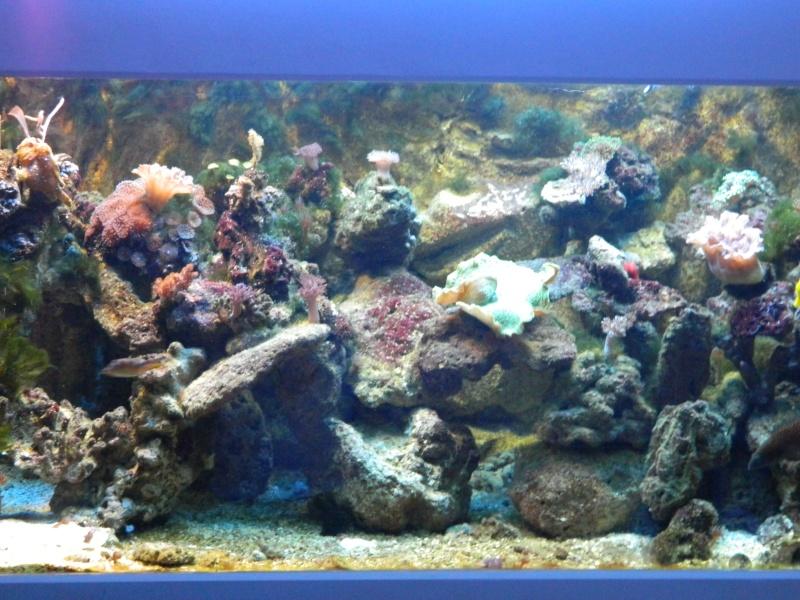 Les algues filamenteuses Dscn1319