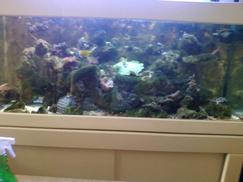 Les algues filamenteuses Photo-24