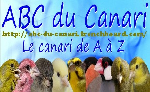 ABC du canari - Portail Forum10