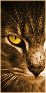 Etoile de Lynx