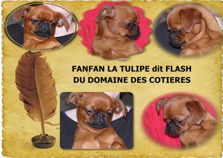fanfan la tulipe 28336610