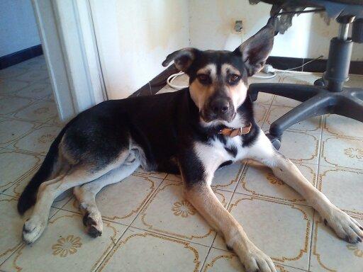 BALTO adopté - EIKO en période d'essai 111
