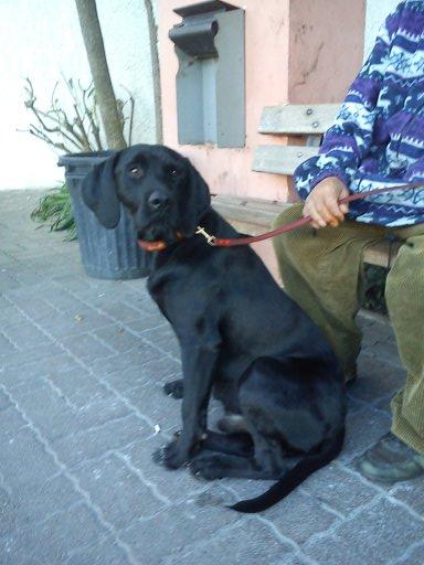 BALTO adopté - EIKO en période d'essai 211