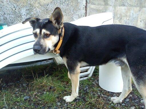 BALTO adopté - EIKO en période d'essai 310