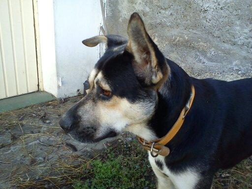 BALTO adopté - EIKO en période d'essai 410