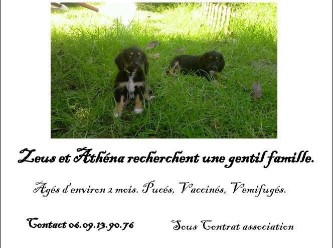 Zeus & Athéna, 2 mois sous asso PAN - adoptés Affich13