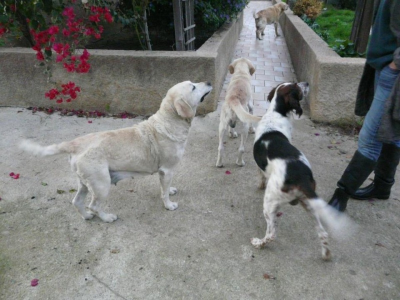 !!! URGENCE !!! 4 chiens enfermés dans un garage sur Ajaccio Chien_10