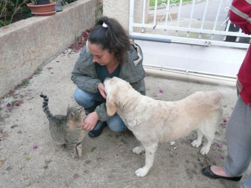 !!! URGENCE !!! 4 chiens enfermés dans un garage sur Ajaccio Fifill10