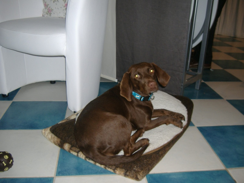 Lilou petite chienne au grand coeur en FA chez mitsu sous asso PAN (ADOPTEE) - Page 2 Lilou_10