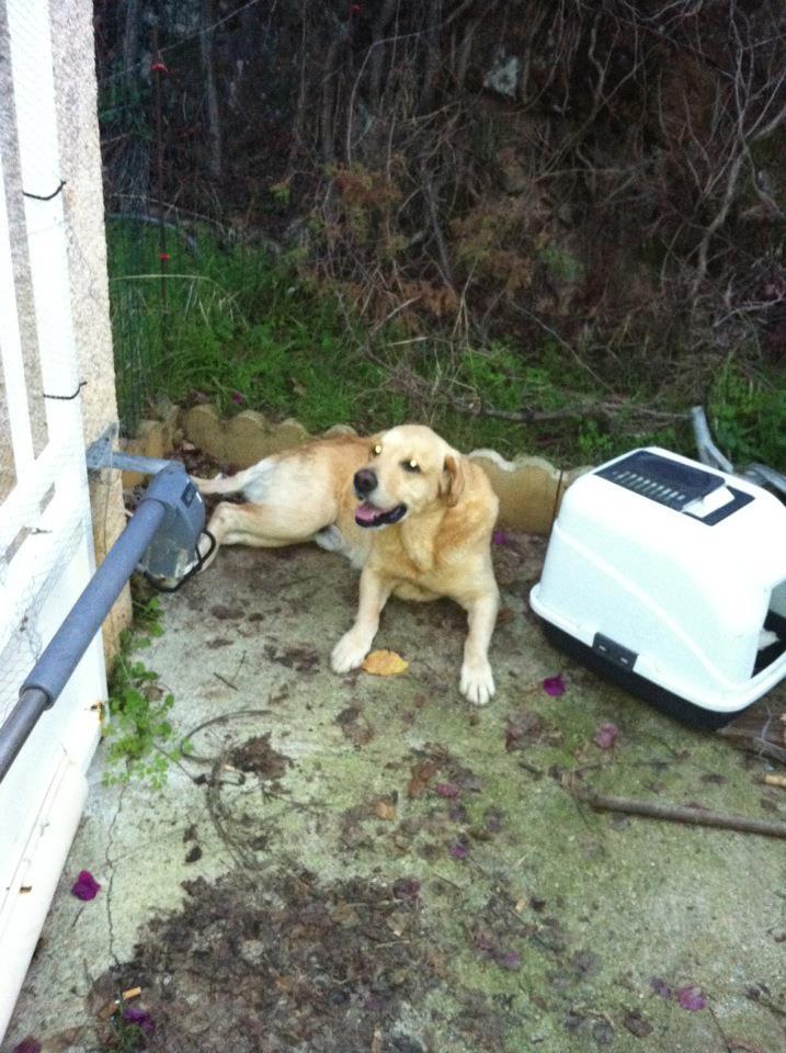 !!! URGENCE !!! 4 chiens enfermés dans un garage sur Ajaccio Ribell10