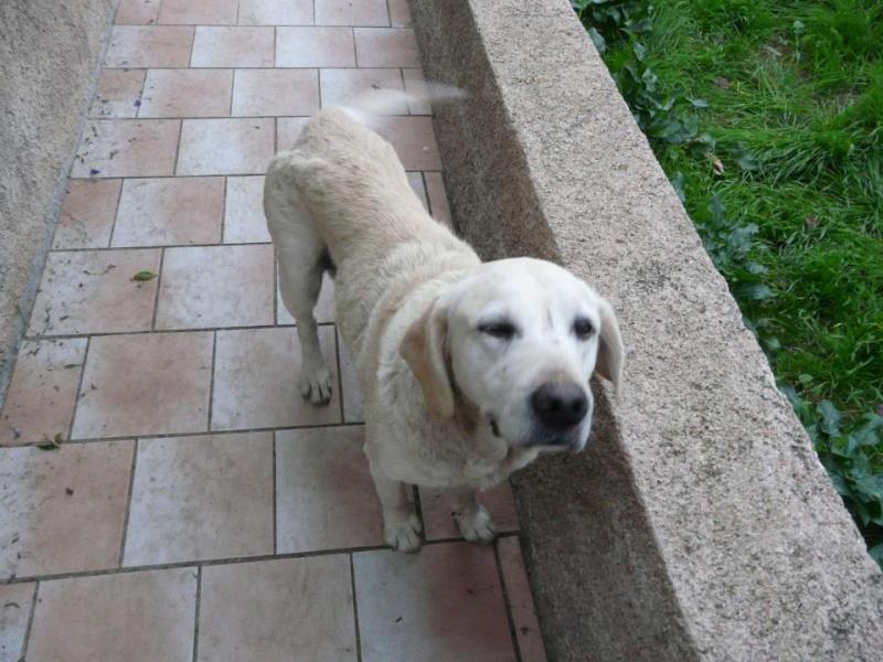 !!! URGENCE !!! 4 chiens enfermés dans un garage sur Ajaccio River_10