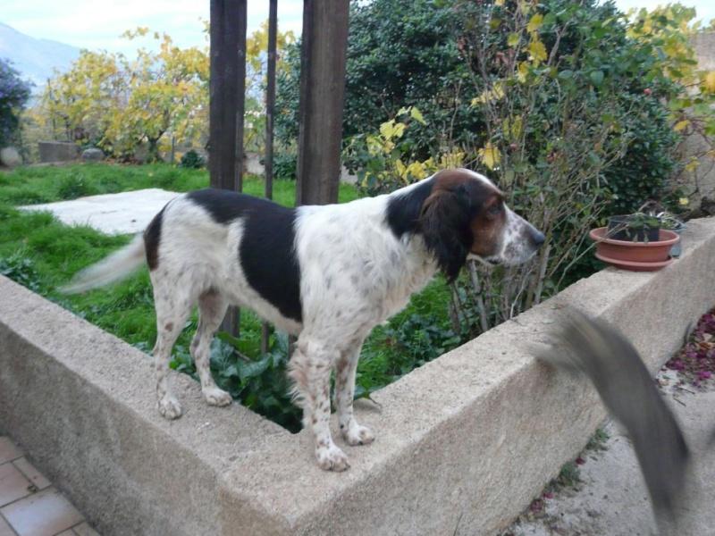 !!! URGENCE !!! 4 chiens enfermés dans un garage sur Ajaccio Vailla10