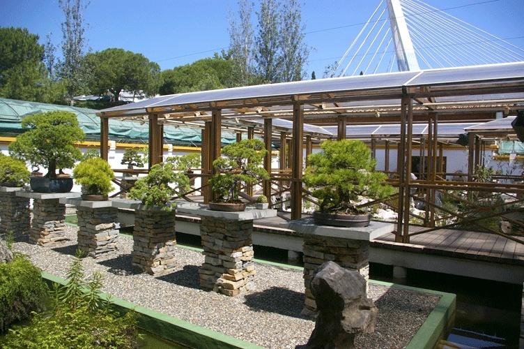 Bonsai Museum Marbella Imgp7116