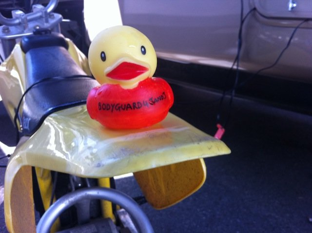 """""""Duck Nation"""" 29904810"""