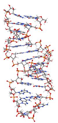 ARN & llojet e tij 200px-10