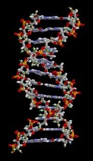 ADN-ja Adn_an10