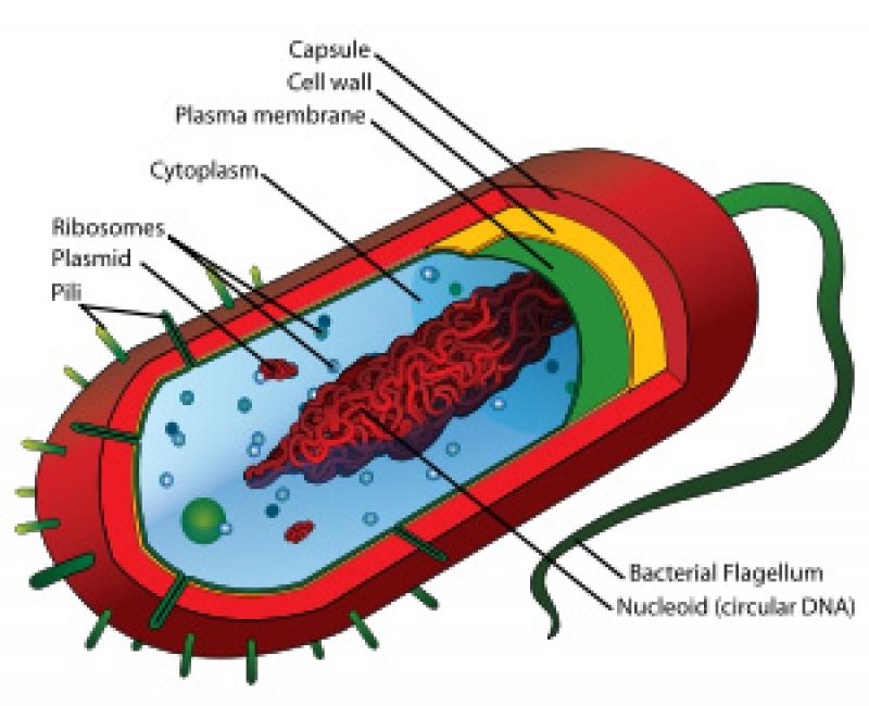 Çka janë prokariotet? D10