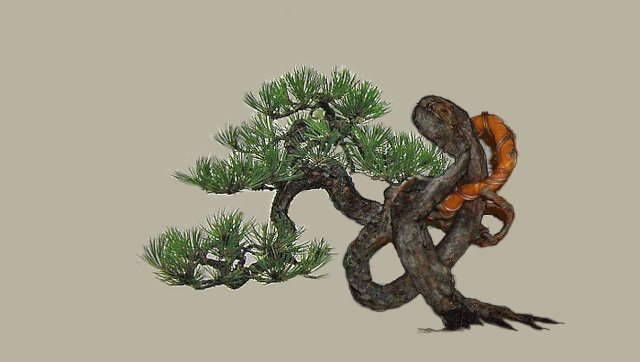 Knot pine style - Page 2 Law_tr12
