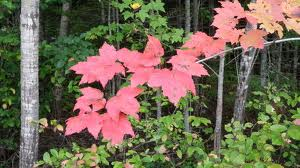 Bonjour à tous Dieu nous bénit en ce 12 Novembre : Souviens-toi des merveilles de Dieu Action10