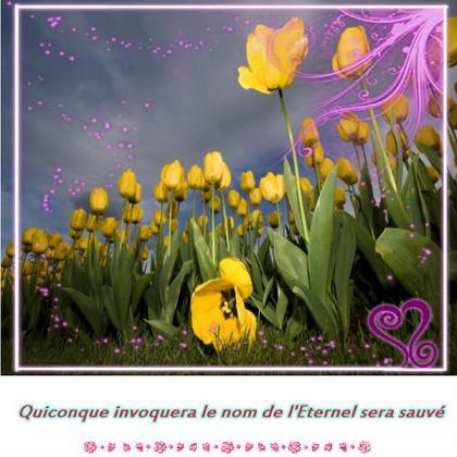 Bonjour à tous Dieu nous bénit en ce 12 Novembre : Souviens-toi des merveilles de Dieu Beaute64