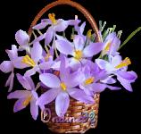 NEUVAINE À LA MISÉRICORDE DIVINE du vendredi saint au 2ème dimanche de Pâques Corbei10