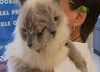 zoologie tératologie monstre deux têtes Frankenlouie malformations anomalie congénitale forum animaux dans les cultures mammifères chat Millbury Massachusetts