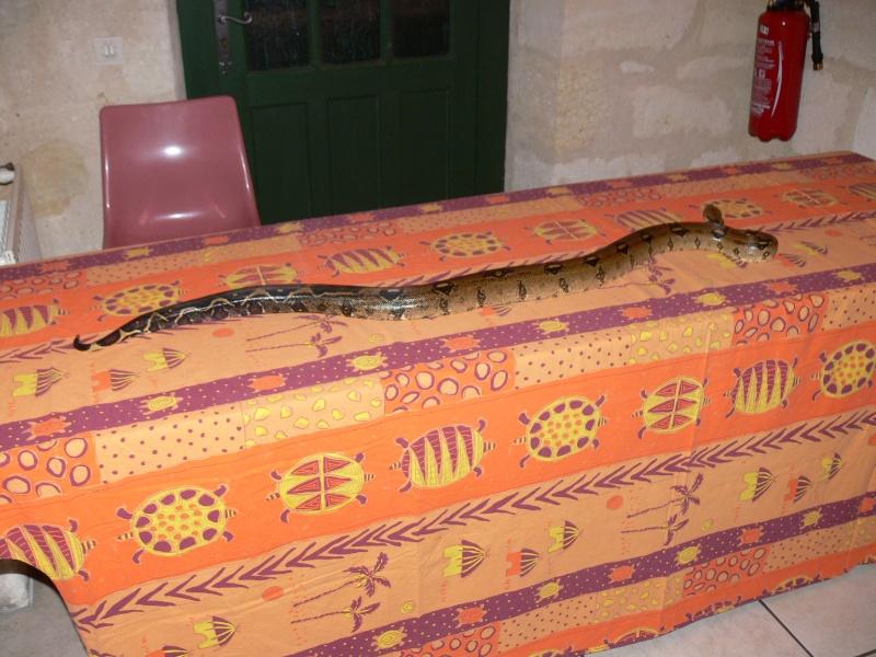 Quel serpent et le mieux pour débuter - Page 2 P1050710