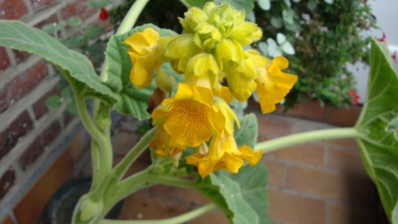 quelques photo de certaine de mes plantes . 02510