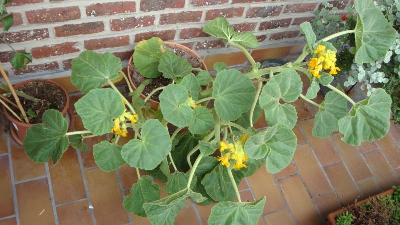 quelques photo de certaine de mes plantes . 02610