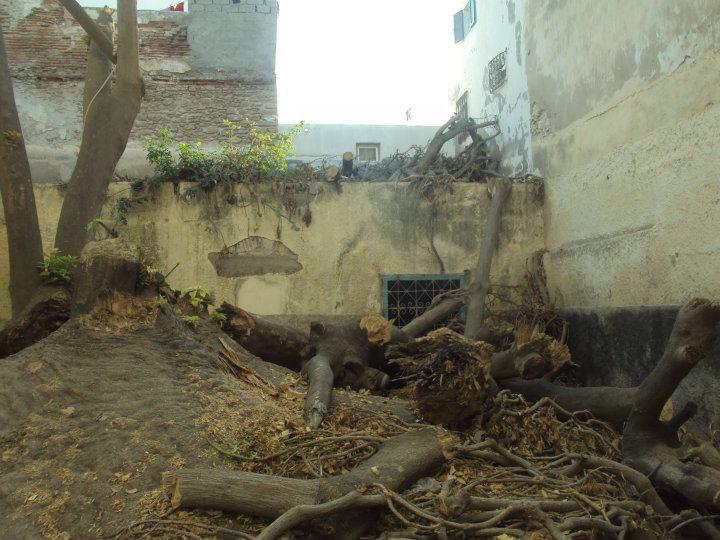 L'arbre centenaire et sacré de notre ville 30154010