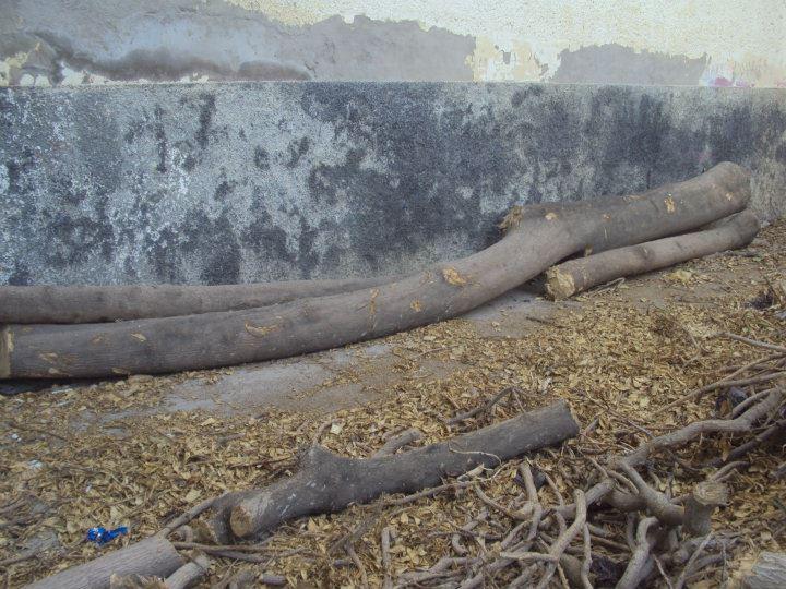 L'arbre centenaire et sacré de notre ville 31254910