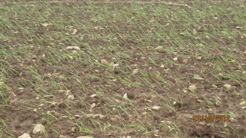 Semis de blé dur, où en êtes-vous? Bd201212