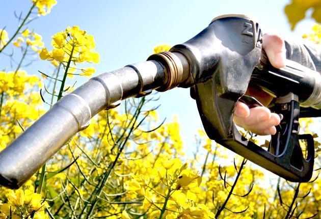 Le bioéthanol se prépare pour l'export  Bioeth10