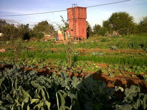 Une exception dans le paysage agricole marocain  Ferme-10