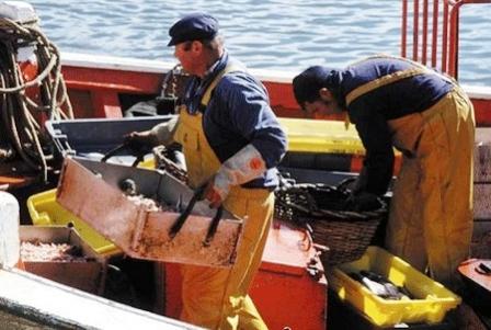 أنواع من الأسماك المصطادة بجنوب إسبانيا وشمال المغرب تتسبب في بعض الأمراض Info_187