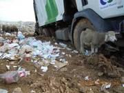 Gestion des déchets ménagers à Mohammedia Tecmed jette l'éponge, Sita El Beida prend le relais  Tecmed10
