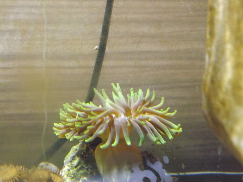 quel est le nom de ce corail ? Dscf7010