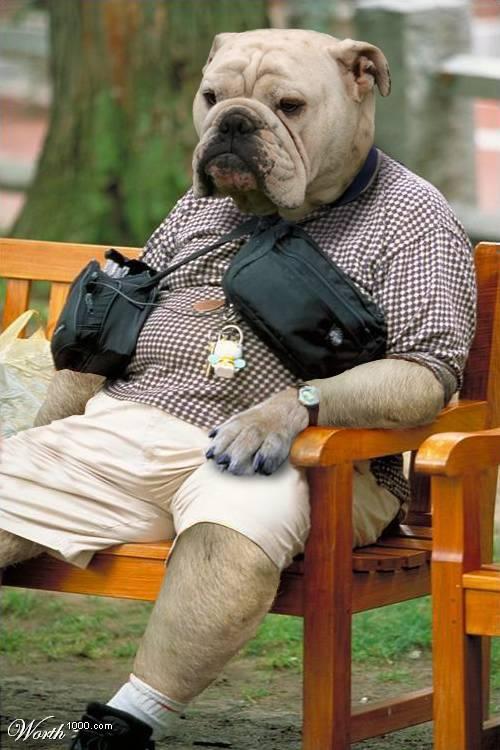 Psi i psići (kinologija, pasmine pasa, obuka pasa, dresura pasa, lovački psi, kućni psi, hranidba pasa, slike pasa, Vaša najdraža pasmina pasa, izložbe pasa, šetanje pasa, kupanje pasa, perilica za pse, hrana za pse) - Page 9 52103110